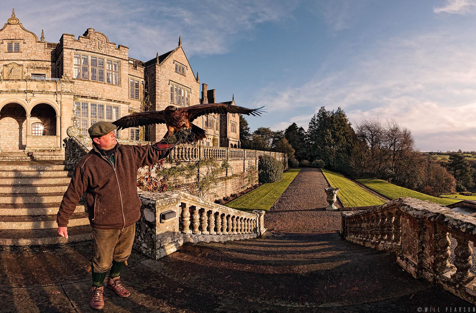 Artemis the Eagle at Bovey Castle