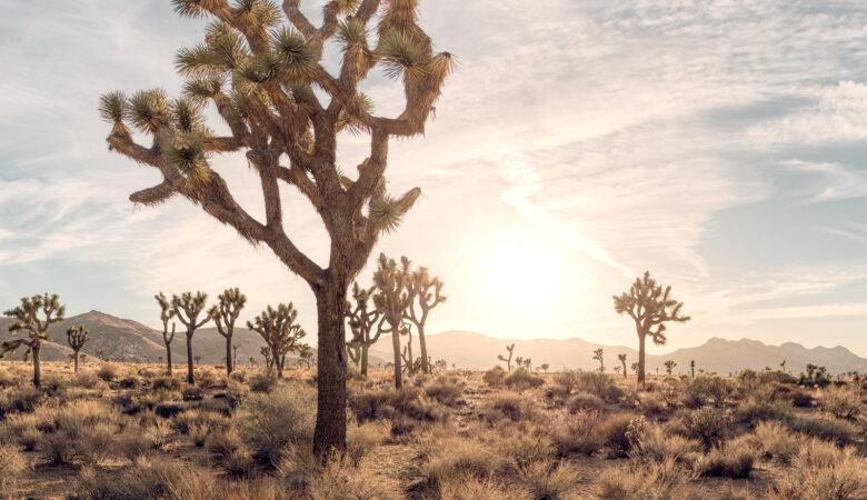 Joshua Tree 360 | California Photography