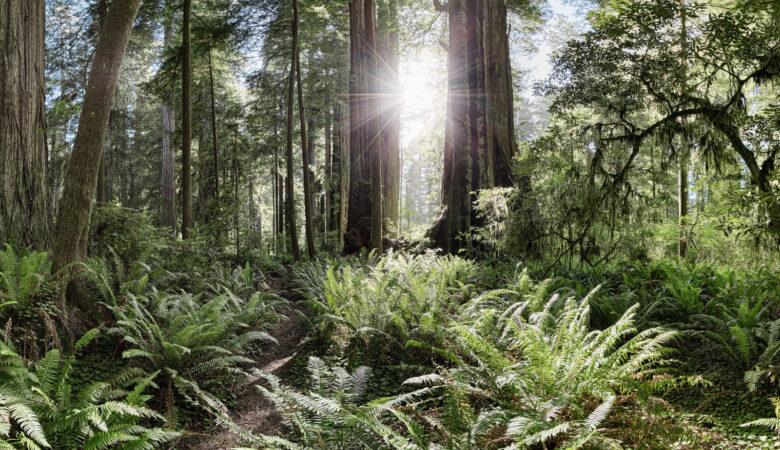 Humboldt Redwoods State Park 360 - California 360s