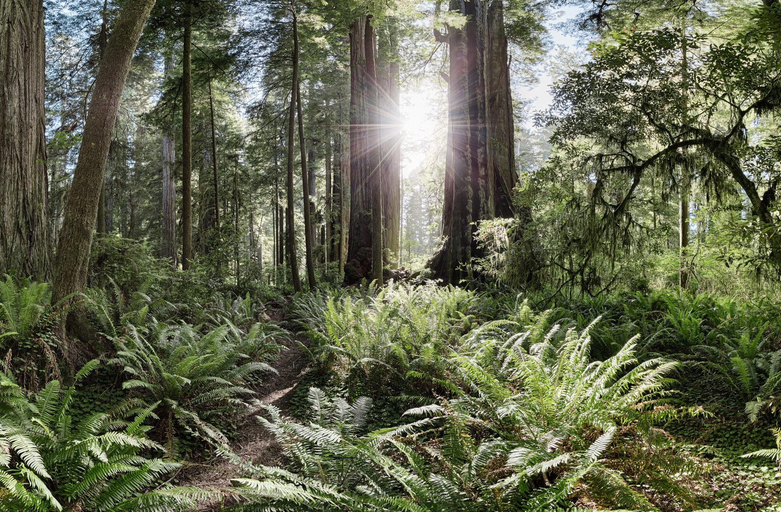 Humboldt Redwoods State Park 360